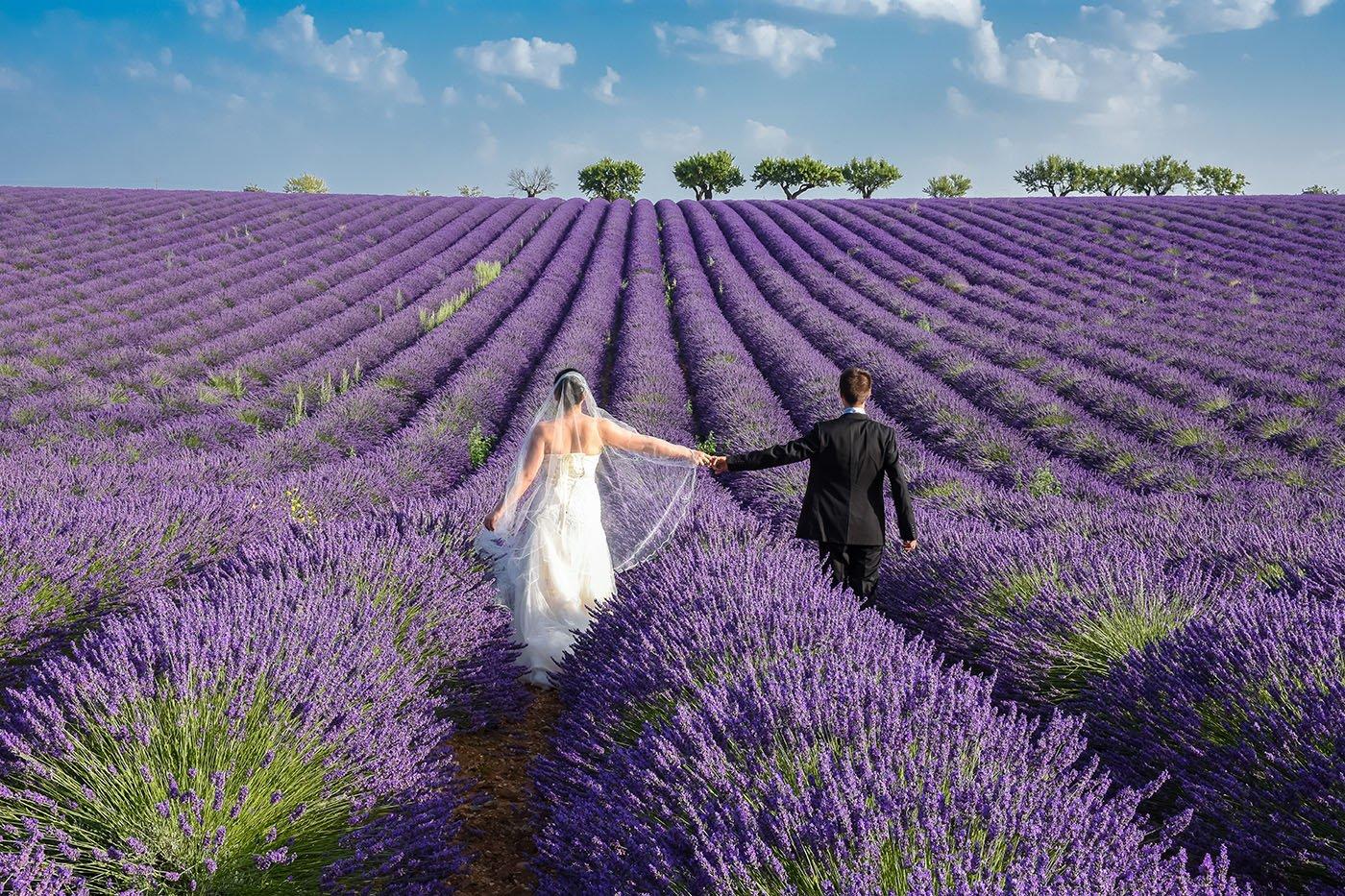 Photo de mariés dans un champs de lavande en Provence
